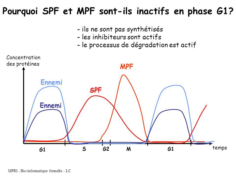 MPRI - Bio-informatique formelle - LC Pourquoi SPF et MPF sont-ils inactifs en phase G1? - ils ne sont pas synthétisés - les inhibiteurs sont actifs -
