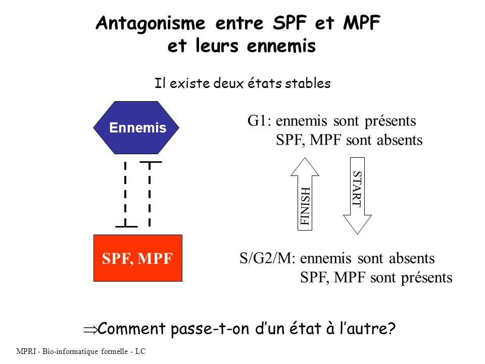 MPRI - Bio-informatique formelle - LC Antagonisme entre SPF et MPF et leurs ennemis SPF, MPF G1: ennemis sont présents SPF, MPF sont absents S/G2/M: e