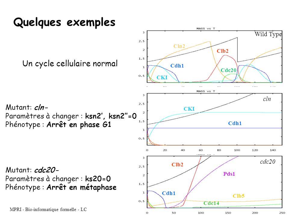 MPRI - Bio-informatique formelle - LC Cln2 Clb2 Cdh1 CKI Cdc20 Wild Type Pds1 Clb2 Cdh1 Clb5 Cdc14 cdc20 Cdh1 CKI cln Mutant: cln- Paramètres à change