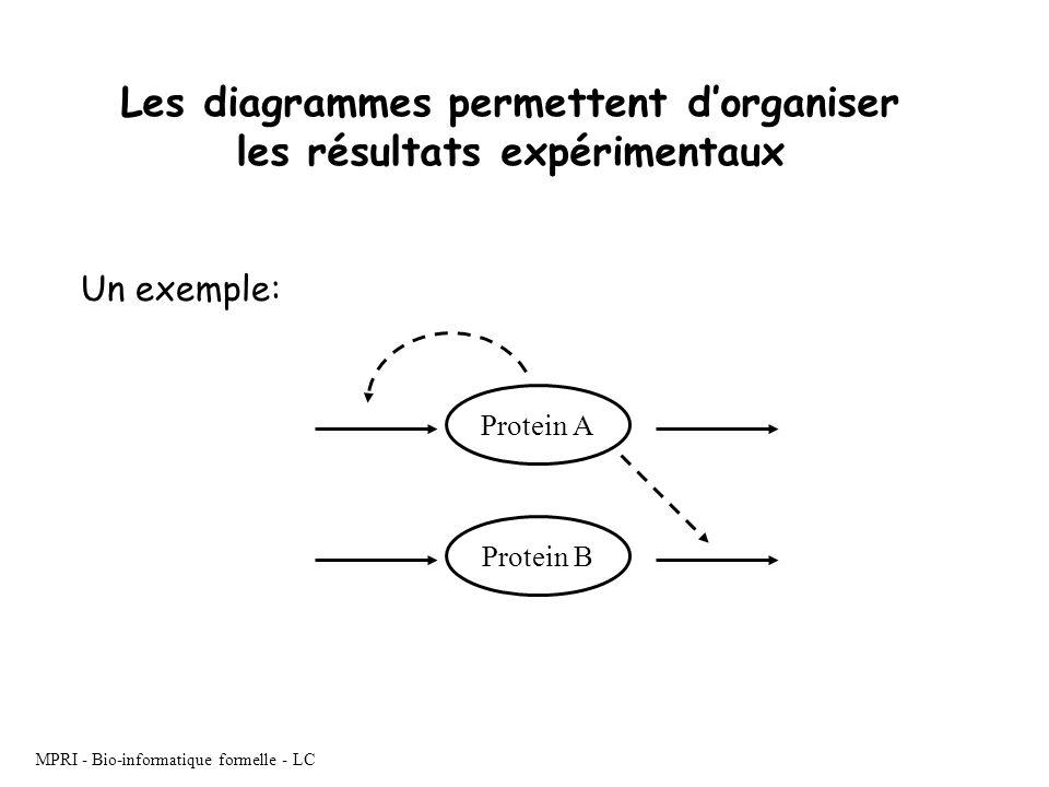 MPRI - Bio-informatique formelle - LC Les diagrammes permettent dorganiser les résultats expérimentaux Protein A Protein B Un exemple: