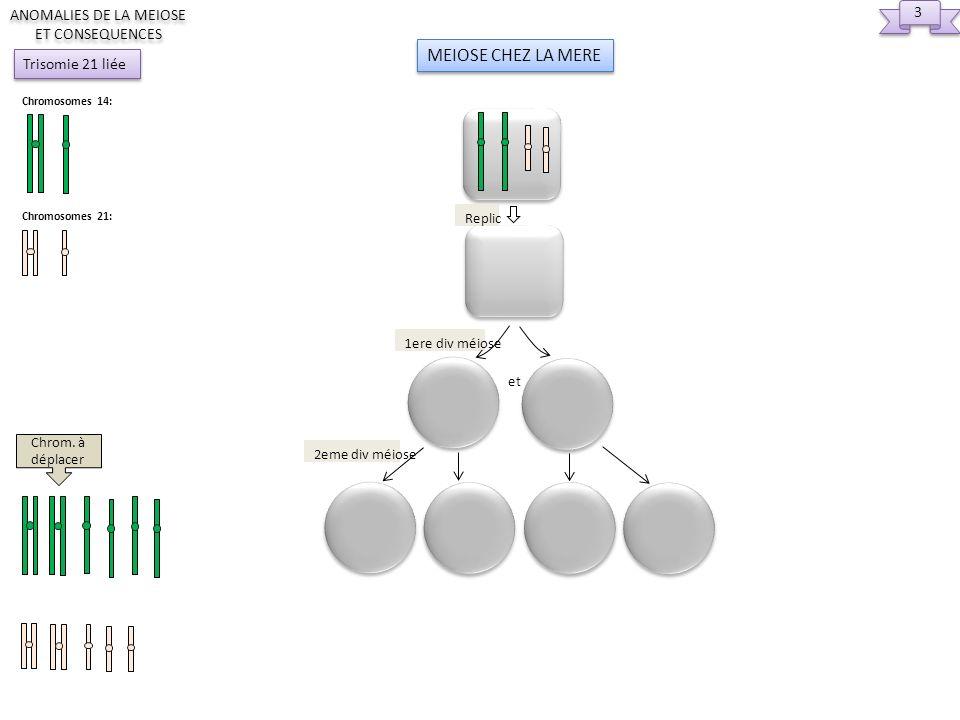 4 4 ANOMALIES DE LA MEIOSE ET CONSEQUENCES Chromosomes 14: Chromosomes 21: Trisomie 21 liée 2eme div méiose Replic et 1ere div méiose MEIOSES CHEZ LE PERE 2eme div méiose Replic et 1ere div méiose Chrom.