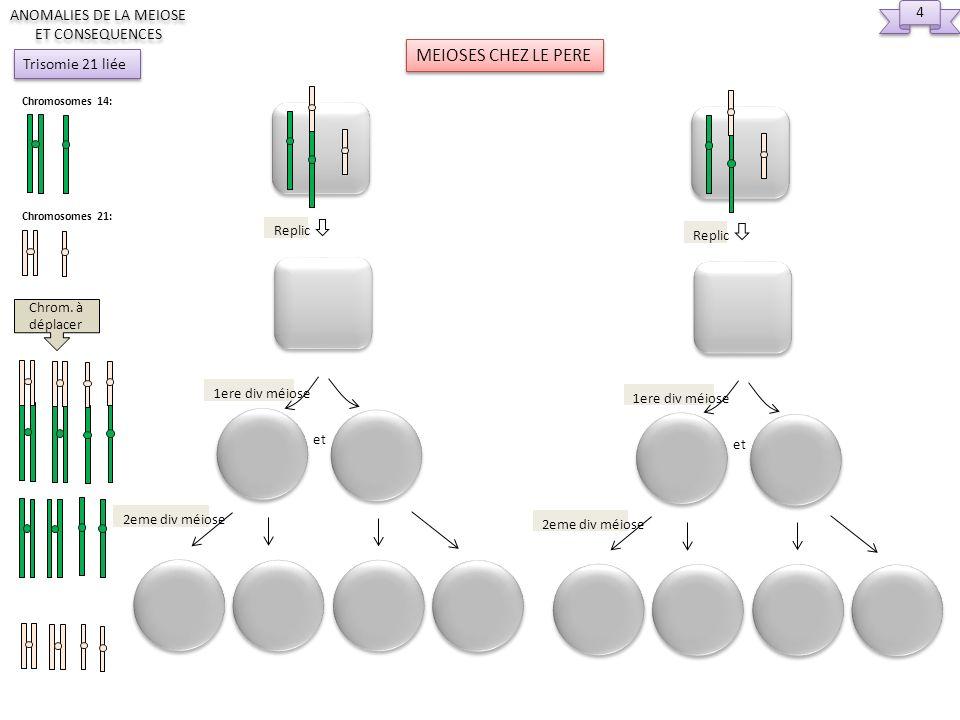 4 4 ANOMALIES DE LA MEIOSE ET CONSEQUENCES Chromosomes 14: Chromosomes 21: Trisomie 21 liée 2eme div méiose Replic et 1ere div méiose MEIOSES CHEZ LE