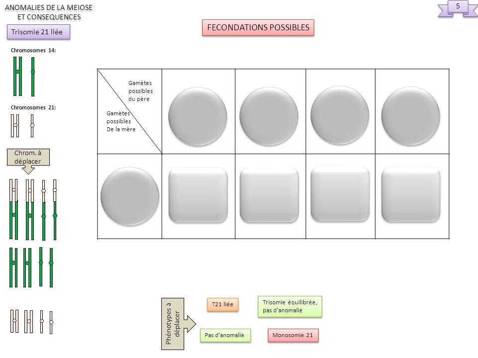 Gamètes possibles De la mère Gamètes possibles du père 5 5 FECONDATIONS POSSIBLES ANOMALIES DE LA MEIOSE ET CONSEQUENCES Chromosomes 14: Chromosomes 2