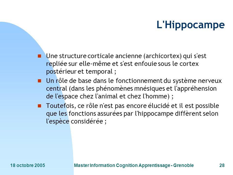 18 octobre 2005Master Information Cognition Apprentissage - Grenoble28 L'Hippocampe n Une structure corticale ancienne (archicortex) qui s'est repliée