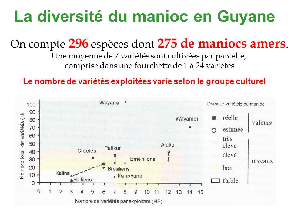 La diversité du manioc en Guyane On compte 296 espèces dont 275 de maniocs amers. Une moyenne de 7 variétés sont cultivées par parcelle, comprise dans