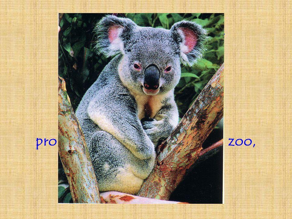 Imaginons quatre phrases, déclarative, interrogative, impérative et exclamative, prononcées par des visiteurs du zoo, devant ce koala.