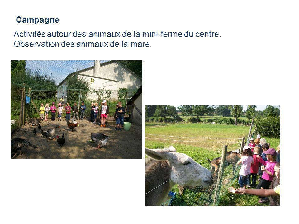 Campagne Activités autour des animaux de la mini-ferme du centre. Observation des animaux de la mare.