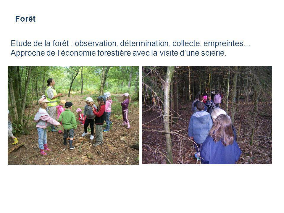 Forêt Etude de la forêt : observation, détermination, collecte, empreintes… Approche de léconomie forestière avec la visite dune scierie.