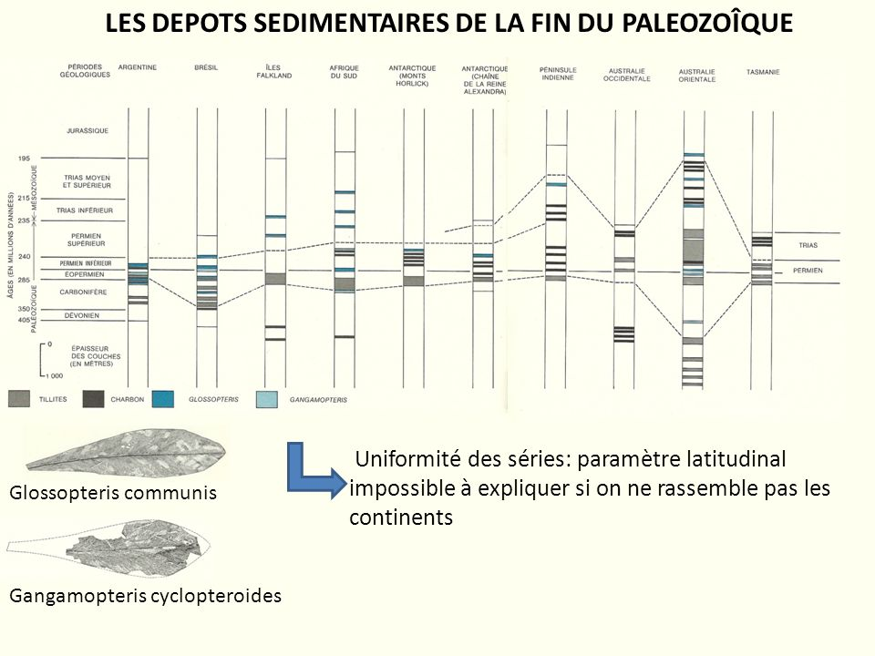 Glossopteris communis Gangamopteris cyclopteroides Uniformité des séries: paramètre latitudinal impossible à expliquer si on ne rassemble pas les cont
