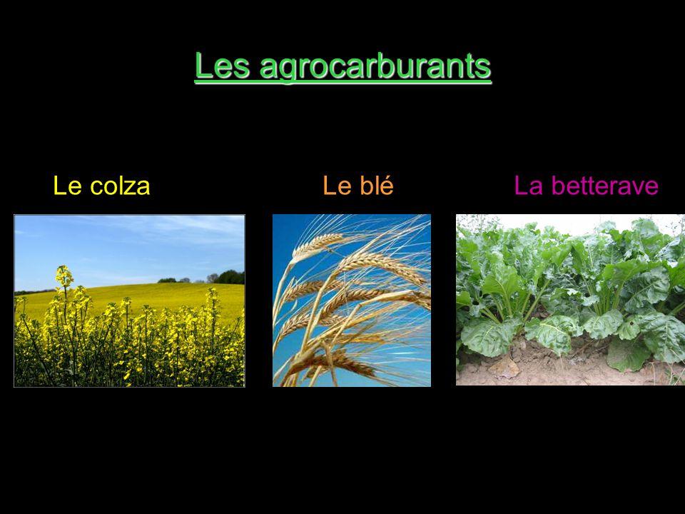 Les agrocarburants Le colzaLa betteraveLe blé