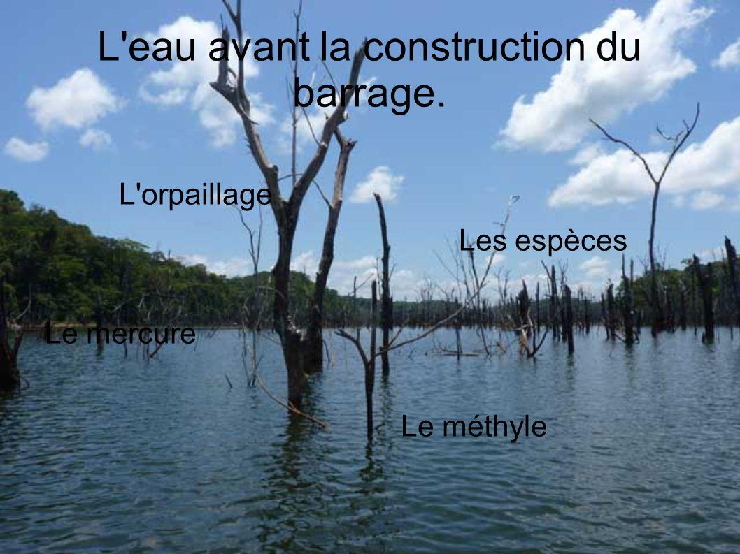 L eau avant la construction du barrage. L orpaillage Les espèces Le mercure Le méthyle