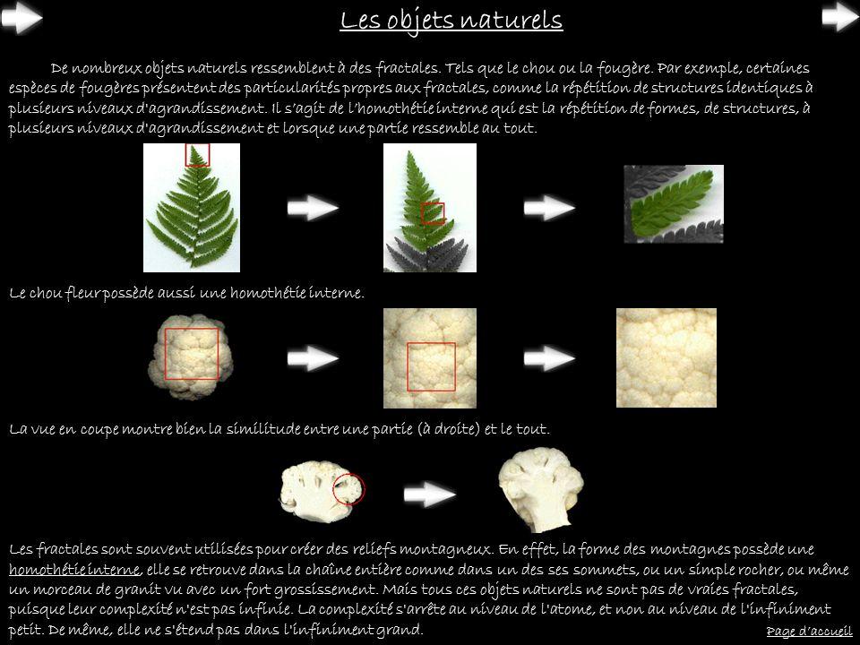 Les objets naturels De nombreux objets naturels ressemblent à des fractales. Tels que le chou ou la fougère. Par exemple, certaines espèces de fougère