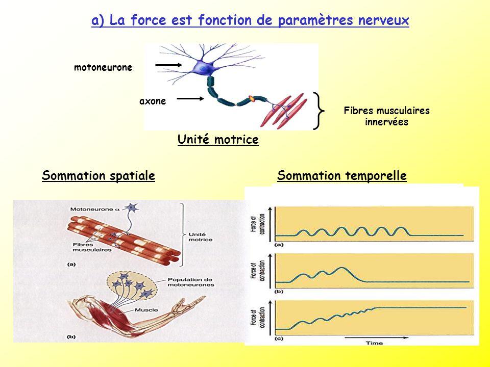 a) La force est fonction de paramètres nerveux Unité motrice Fibres musculaires innervées axone motoneurone Sommation spatialeSommation temporelle