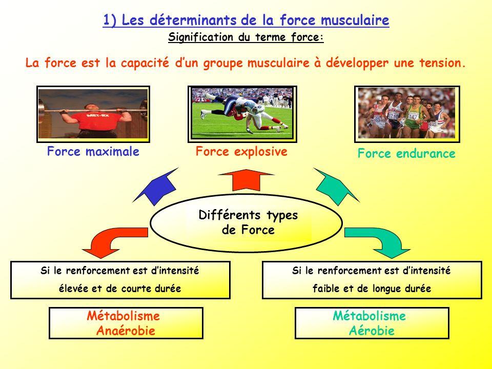 Signification du terme force: La force est la capacité dun groupe musculaire à développer une tension. 1) Les déterminants de la force musculaire Diff