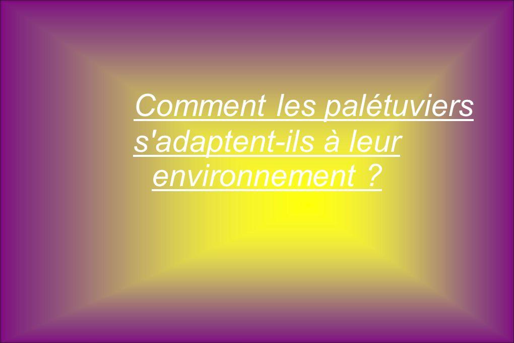 Fin de l exposé Réalisé par : - Duchesne Pauline - Canu Yaëlle - Sement Mathis - Louis Noam.
