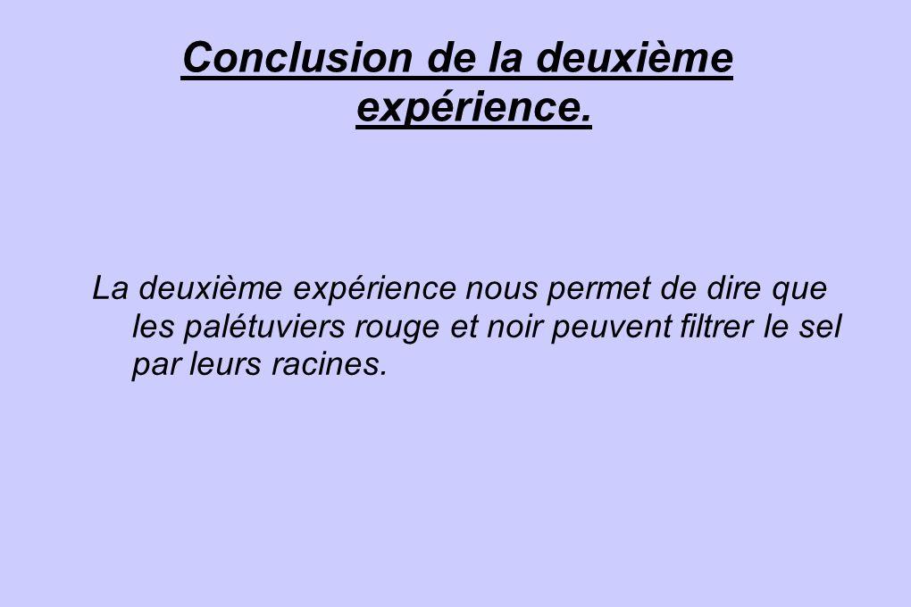 Conclusion de la deuxième expérience. La deuxième expérience nous permet de dire que les palétuviers rouge et noir peuvent filtrer le sel par leurs ra
