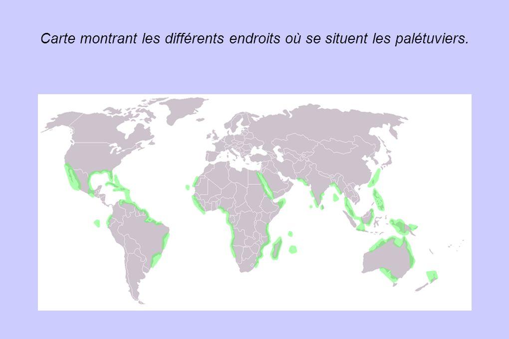 Carte montrant les différents endroits où se situent les palétuviers. Titre