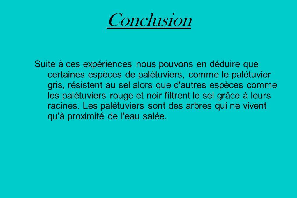 Conclusion Suite à ces expériences nous pouvons en déduire que certaines espèces de palétuviers, comme le palétuvier gris, résistent au sel alors que