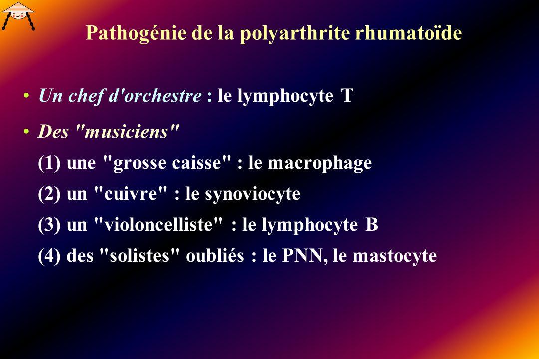 Pathogénie de la polyarthrite rhumatoïde Un chef d orchestre : le lymphocyte T Des musiciens (1) une grosse caisse : le macrophage (2) un cuivre : le synoviocyte (3) un violoncelliste : le lymphocyte B (4) des solistes oubliés : le PNN, le mastocyte