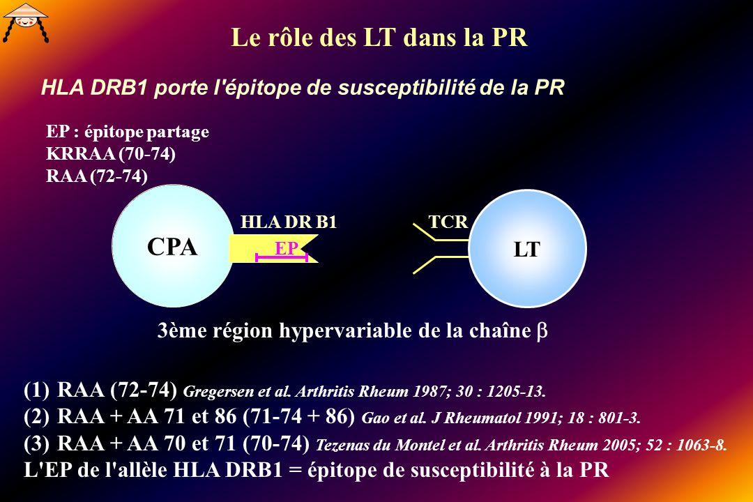CPA EP : épitope partage KRRAA (70-74) RAA (72-74) HLA DR B1 EP 3ème région hypervariable de la chaîne (1)RAA (72-74) Gregersen et al. Arthritis Rheum