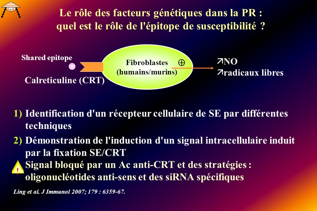 Le rôle des facteurs génétiques dans la PR : quel est le rôle de l'épitope de susceptibilité ? 1)Identification d'un récepteur cellulaire de SE par di