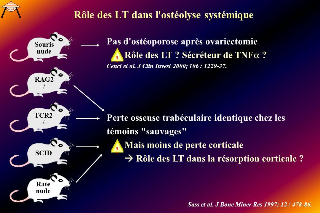 Rôle des LT dans l'ostéolyse systémique Souris nude RAG2 -/- TCR2 -/- SCID Rate nude Sass et al. J Bone Miner Res 1997; 12 : 478-86. Perte osseuse tra