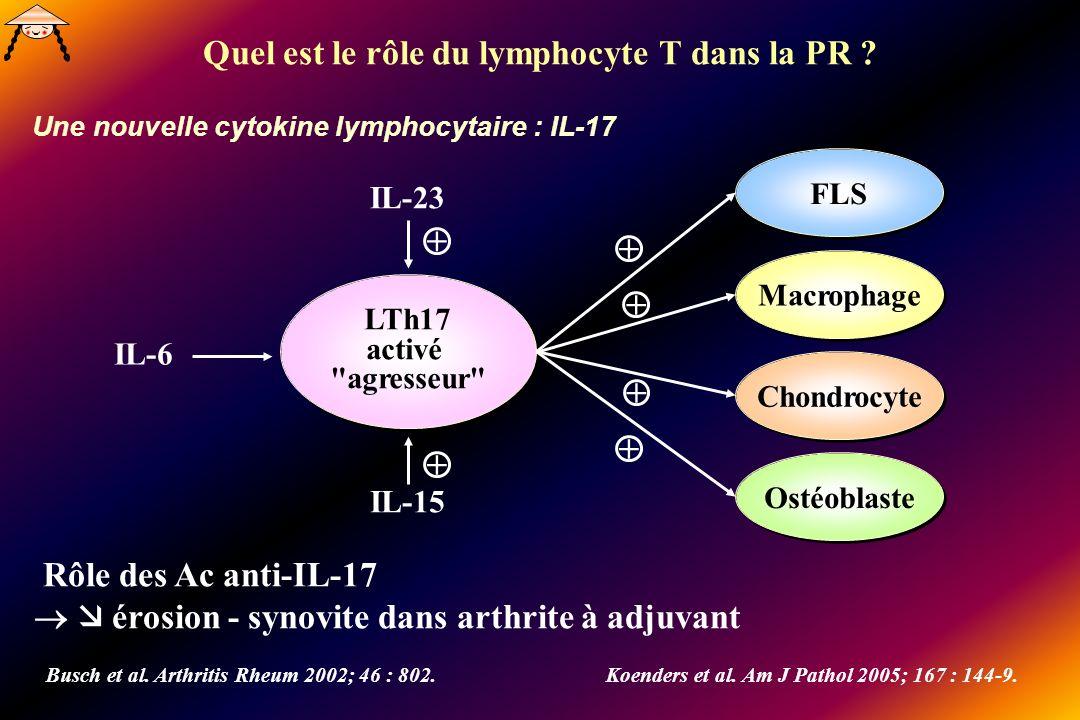 Une nouvelle cytokine lymphocytaire : IL-17 LTh17 activé agresseur FLS Macrophage Rôle des Ac anti-IL-17 érosion - synovite dans arthrite à adjuvant Busch et al.