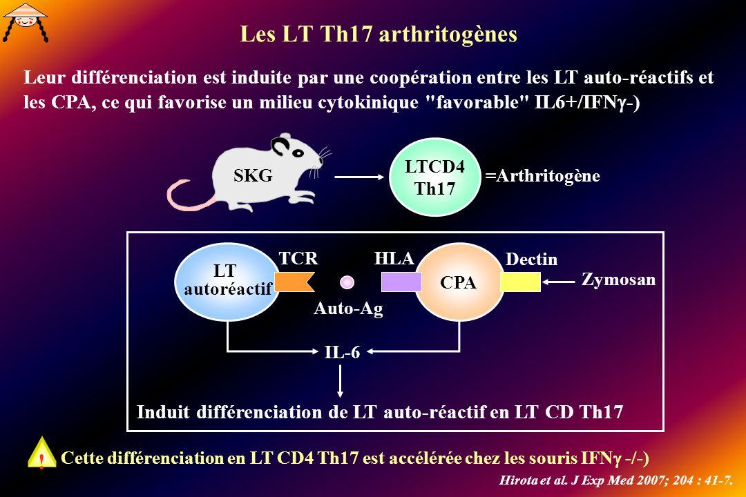 Les LT Th17 arthritogènes SKG LTCD4 Th17 =Arthritogène Leur différenciation est induite par une coopération entre les LT auto-réactifs et les CPA, ce qui favorise un milieu cytokinique favorable IL6+/IFN -) Cette différenciation en LT CD4 Th17 est accélérée chez les souris IFN -/-) .