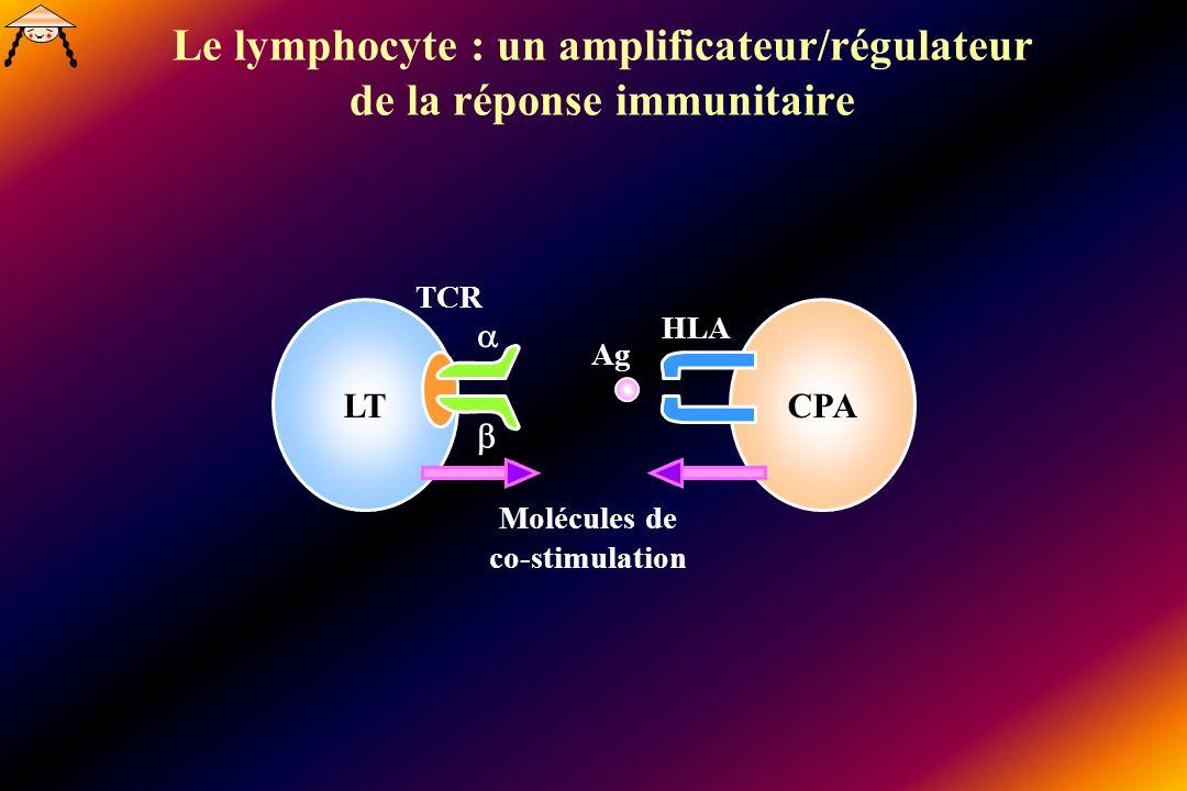 Le lymphocyte : un amplificateur/régulateur de la réponse immunitaire LTCPA Molécules de co-stimulation HLA Ag TCR