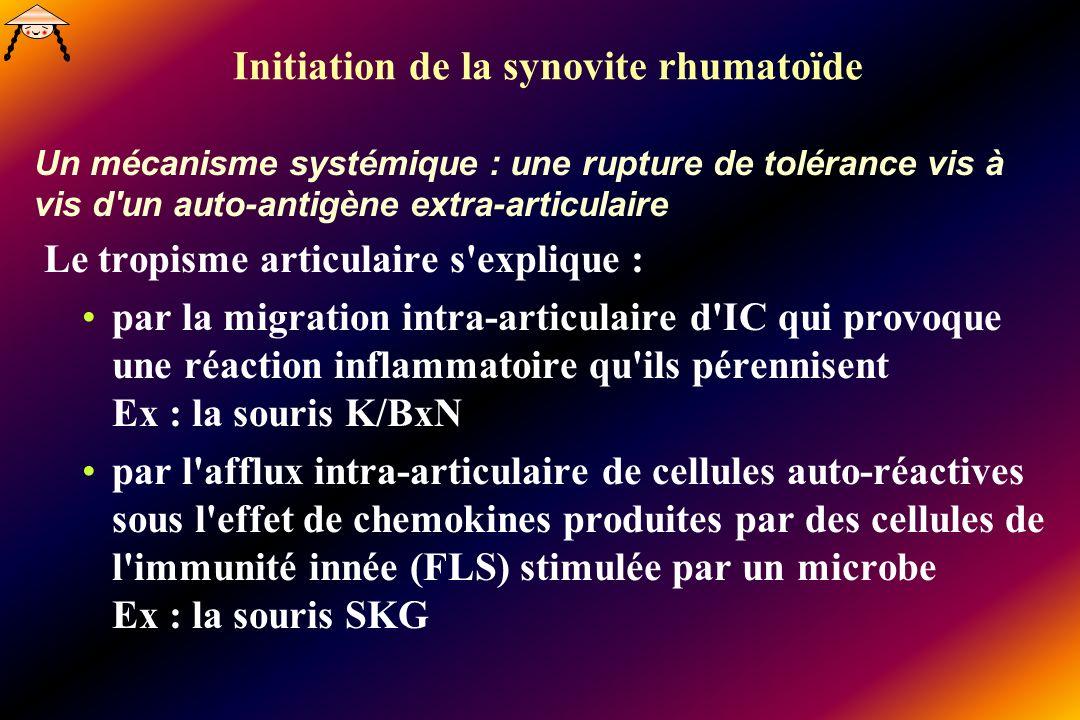 Initiation de la synovite rhumatoïde Un mécanisme systémique : une rupture de tolérance vis à vis d un auto-antigène extra-articulaire Le tropisme articulaire s explique : par la migration intra-articulaire d IC qui provoque une réaction inflammatoire qu ils pérennisent Ex : la souris K/BxN par l afflux intra-articulaire de cellules auto-réactives sous l effet de chemokines produites par des cellules de l immunité innée (FLS) stimulée par un microbe Ex : la souris SKG