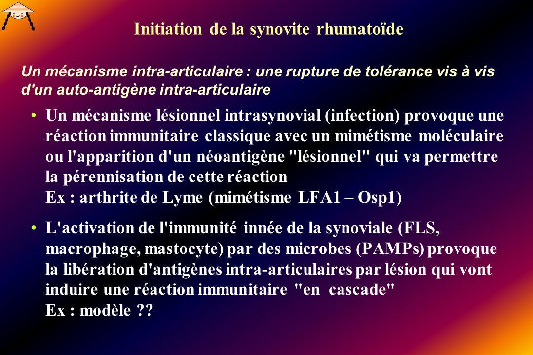 Initiation de la synovite rhumatoïde Un mécanisme intra-articulaire : une rupture de tolérance vis à vis d un auto-antigène intra-articulaire Un mécanisme lésionnel intrasynovial (infection) provoque une réaction immunitaire classique avec un mimétisme moléculaire ou l apparition d un néoantigène lésionnel qui va permettre la pérennisation de cette réaction Ex : arthrite de Lyme (mimétisme LFA1 – Osp1) L activation de l immunité innée de la synoviale (FLS, macrophage, mastocyte) par des microbes (PAMPs) provoque la libération d antigènes intra-articulaires par lésion qui vont induire une réaction immunitaire en cascade Ex : modèle ??