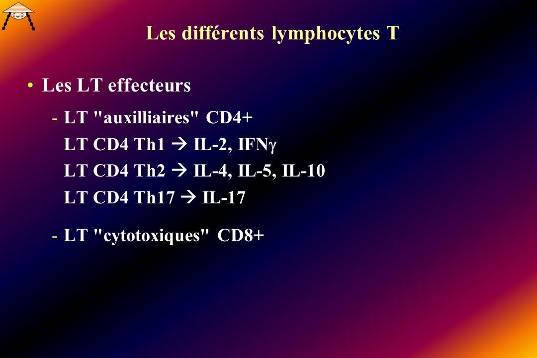 Les différents lymphocytes T Les LT effecteurs -LT auxilliaires CD4+ LT CD4 Th1 IL-2, IFN LT CD4 Th2 IL-4, IL-5, IL-10 LT CD4 Th17 IL-17 -LT cytotoxiques CD8+