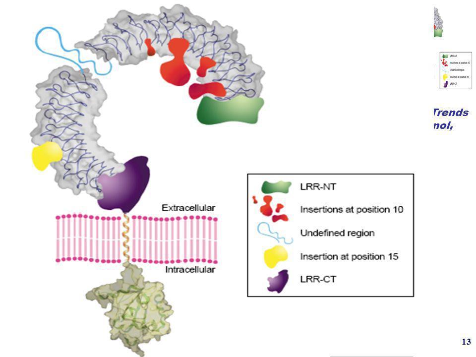 13 Bell, Trends Immunol, 2003 Super- famille des IL-1 /Toll récepteurs