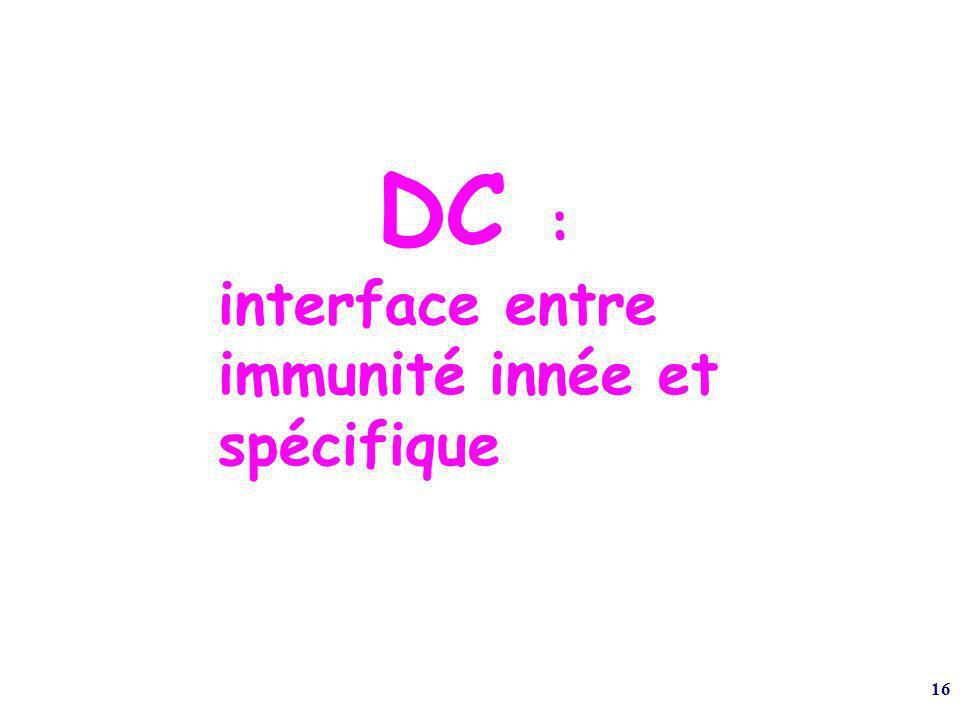 16 DC : interface entre immunité innée et spécifique