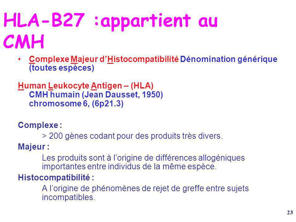 23 HLA-B27 :appartient au CMH Complexe Majeur dHistocompatibilité Dénomination générique (toutes espèces) Human Leukocyte Antigen – (HLA) CMH humain (Jean Dausset, 1950) chromosome 6, (6p21.3) Complexe : > 200 gènes codant pour des produits très divers.