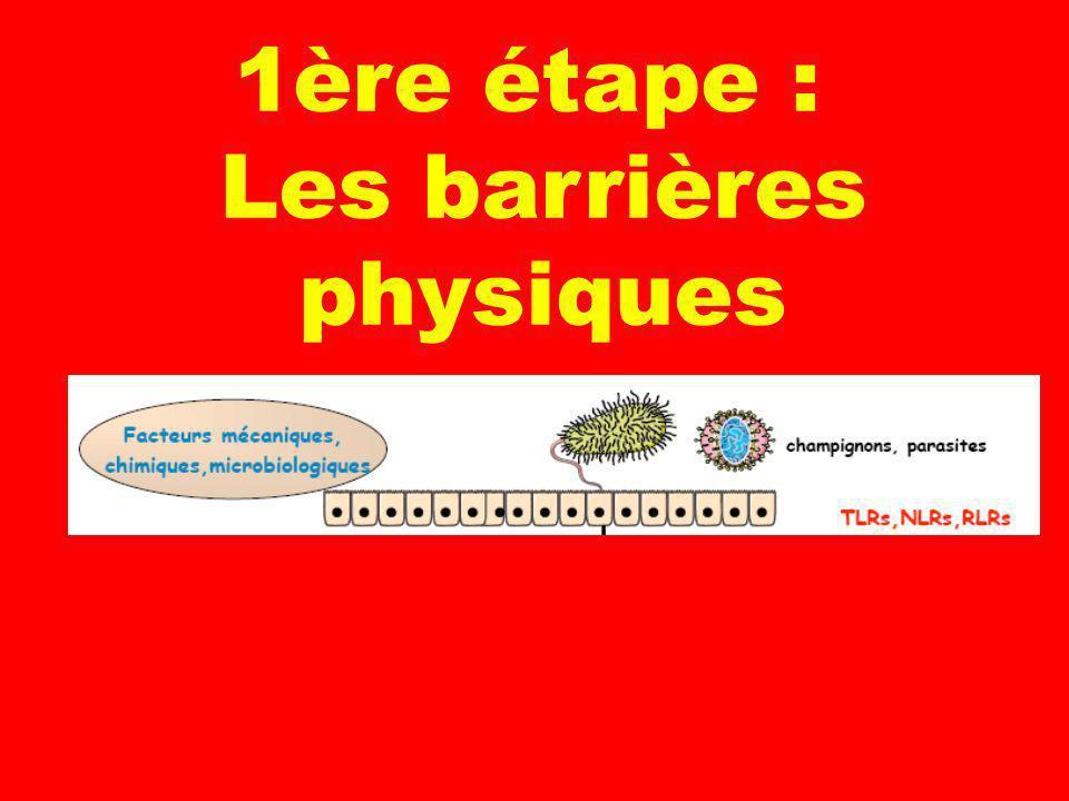 3 1ère étape : Les barrières physiques