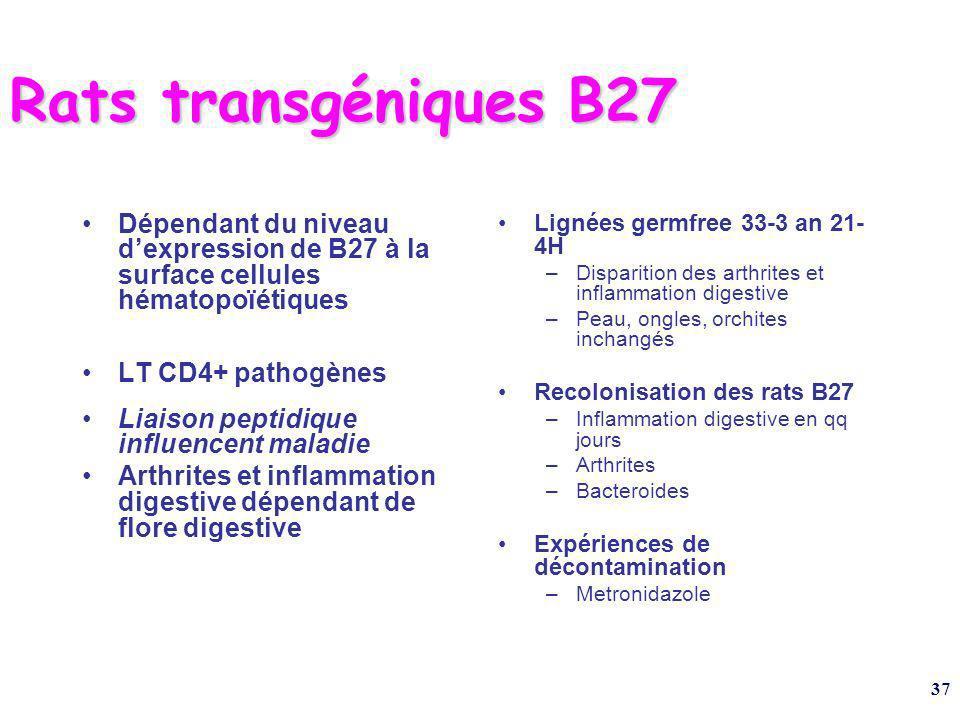 37 Rats transgéniques B27 Dépendant du niveau dexpression de B27 à la surface cellules hématopoïétiques LT CD4+ pathogènes Liaison peptidique influencent maladie Arthrites et inflammation digestive dépendant de flore digestive Lignées germfree 33-3 an 21- 4H –Disparition des arthrites et inflammation digestive –Peau, ongles, orchites inchangés Recolonisation des rats B27 –Inflammation digestive en qq jours –Arthrites –Bacteroides Expériences de décontamination –Metronidazole