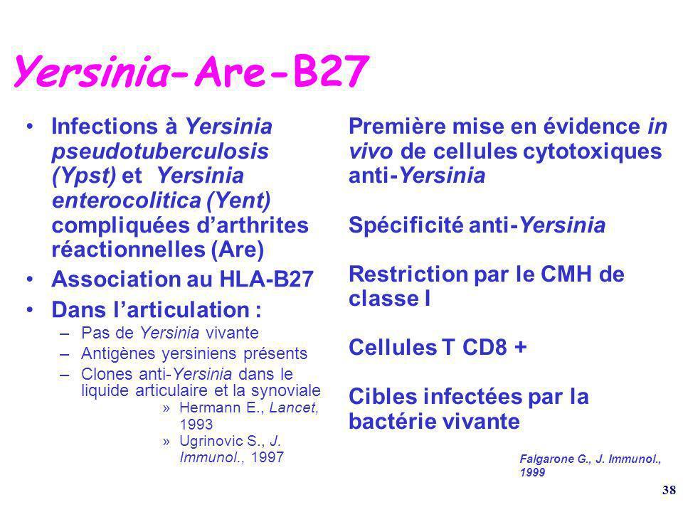 38 Yersinia-Are-B27 Infections à Yersinia pseudotuberculosis (Ypst) et Yersinia enterocolitica (Yent) compliquées darthrites réactionnelles (Are) Association au HLA-B27 Dans larticulation : –Pas de Yersinia vivante –Antigènes yersiniens présents –Clones anti-Yersinia dans le liquide articulaire et la synoviale »Hermann E., Lancet, 1993 »Ugrinovic S., J.