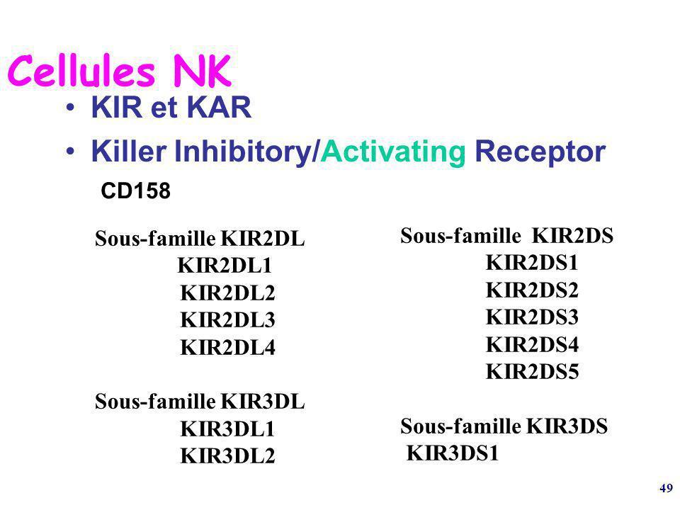 49 Cellules NK KIR et KAR Killer Inhibitory/Activating Receptor CD158 Sous-famille KIR2DL KIR2DL1 KIR2DL2 KIR2DL3 KIR2DL4 Sous-famille KIR3DL KIR3DL1 KIR3DL2 Sous-famille KIR2DS KIR2DS1 KIR2DS2 KIR2DS3 KIR2DS4 KIR2DS5 Sous-famille KIR3DS KIR3DS1