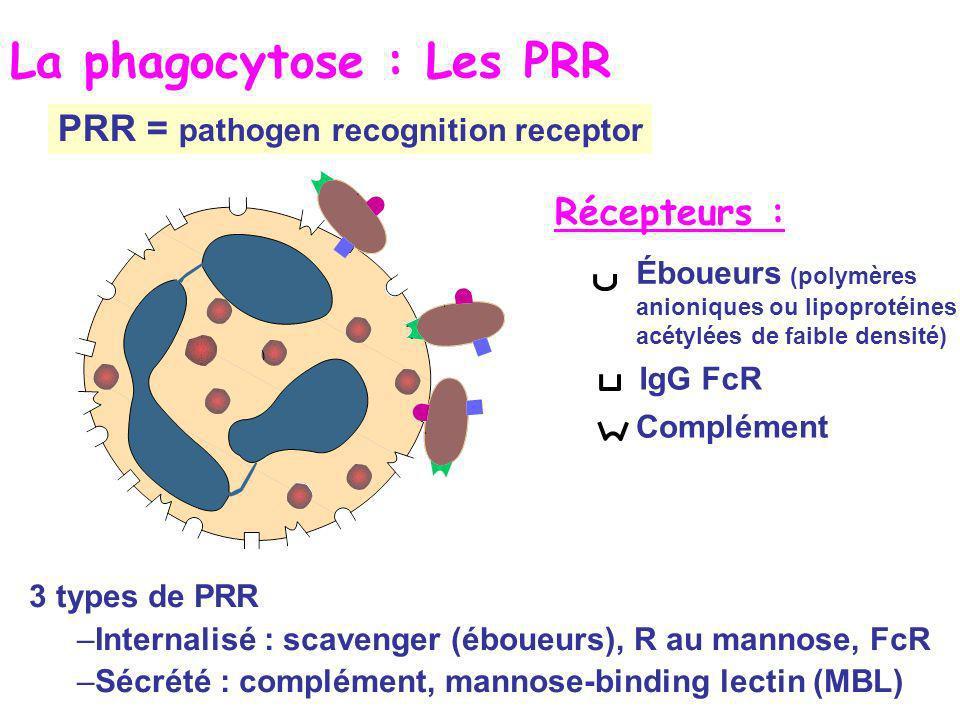 IgG FcR Éboueurs (polymères anioniques ou lipoprotéines acétylées de faible densité) Complément Récepteurs : La phagocytose : Les PRR 3 types de PRR –Internalisé : scavenger (éboueurs), R au mannose, FcR –Sécrété : complément, mannose-binding lectin (MBL) PRR = pathogen recognition receptor
