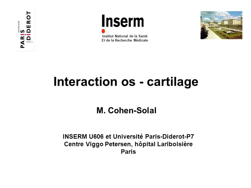 Interaction os - cartilage Institut National de la Santé Et de la Recherche Médicale M. Cohen-Solal INSERM U606 et Université Paris-Diderot-P7 Centre