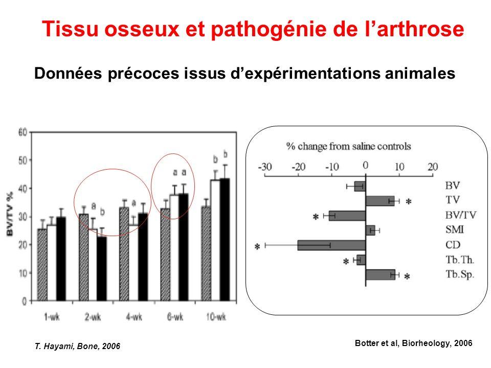 Données précoces issus dexpérimentations animales T. Hayami, Bone, 2006 Tissu osseux et pathogénie de larthrose Botter et al, Biorheology, 2006