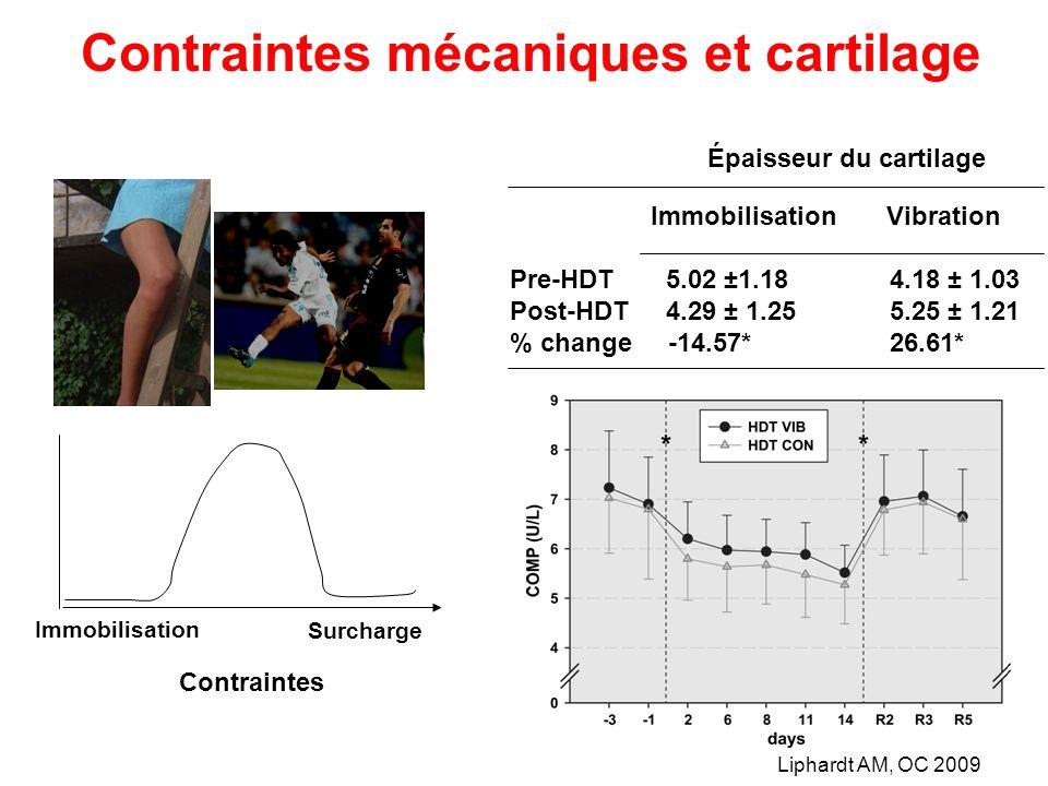 Immobilisation Contraintes Surcharge Contraintes mécaniques et cartilage Liphardt AM, OC 2009 Immobilisation Vibration Pre-HDT 5.02 ±1.18 4.18 ± 1.03