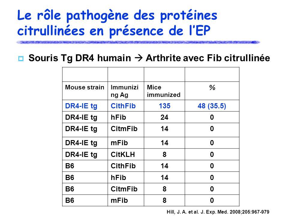Mouse strainImmunizi ng Ag Mice immunized % DR4-IE tgCithFib13548 (35.5) DR4-IE tghFib240 DR4-IE tgCitmFib140 DR4-IE tgmFib140 DR4-IE tgCitKLH80 B6Cit