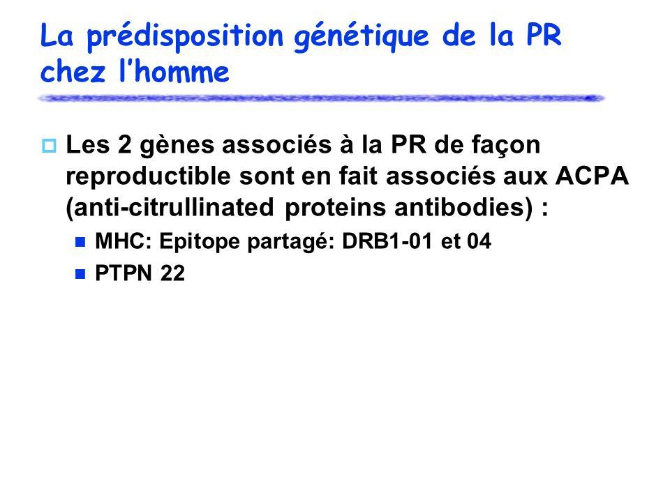 La prédisposition génétique de la PR chez lhomme Les 2 gènes associés à la PR de façon reproductible sont en fait associés aux ACPA (anti-citrullinated proteins antibodies) : MHC: Epitope partagé: DRB1-01 et 04 PTPN 22