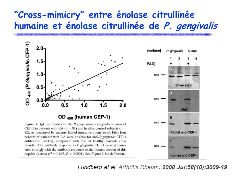 Cross-mimicry entre énolase citrullinée humaine et énolase citrullinée de P. gengivalis Lundberg et al. Arthritis Rheum. 2008 Jul;58(10):3009-19