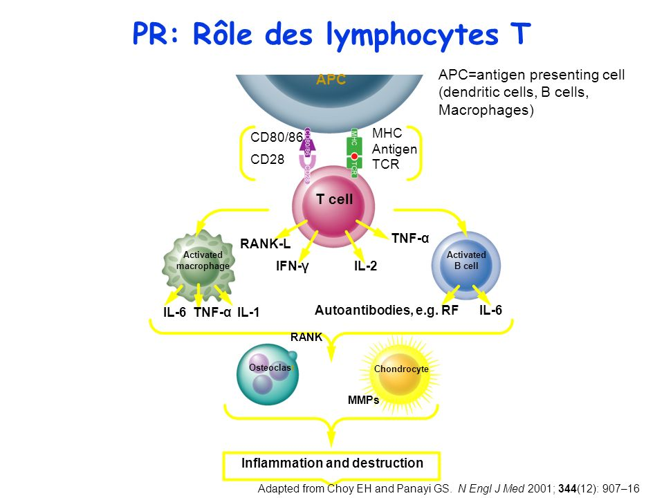 Ce quon apprend aux étudiants Maladie auto-immune En rapport avec des anomalies de limmunité adaptative liée principalement aux lymphocytes Th1 Une prédisposition génétique Médiée essentiellement par une cytokine daval pivot: le TNF