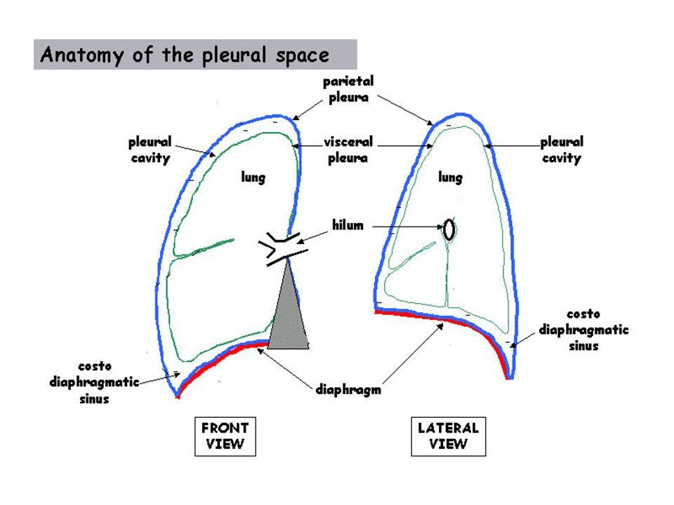 (Miserocchi, Eur Respir J 1997;10:219-225) Drainage veineux de la plèvre pariétale Veines bronchiques (Sahn ARRD 1988)