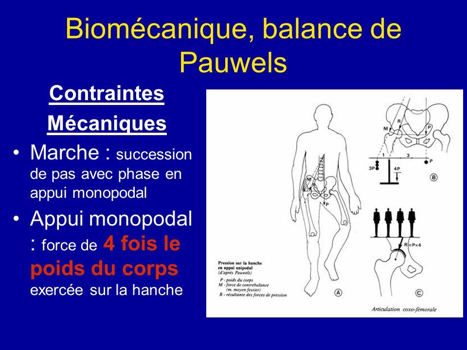 Biomécanique, balance de Pauwels Contraintes Mécaniques Marche : succession de pas avec phase en appui monopodal Appui monopodal : force de 4 fois le poids du corps exercée sur la hanche