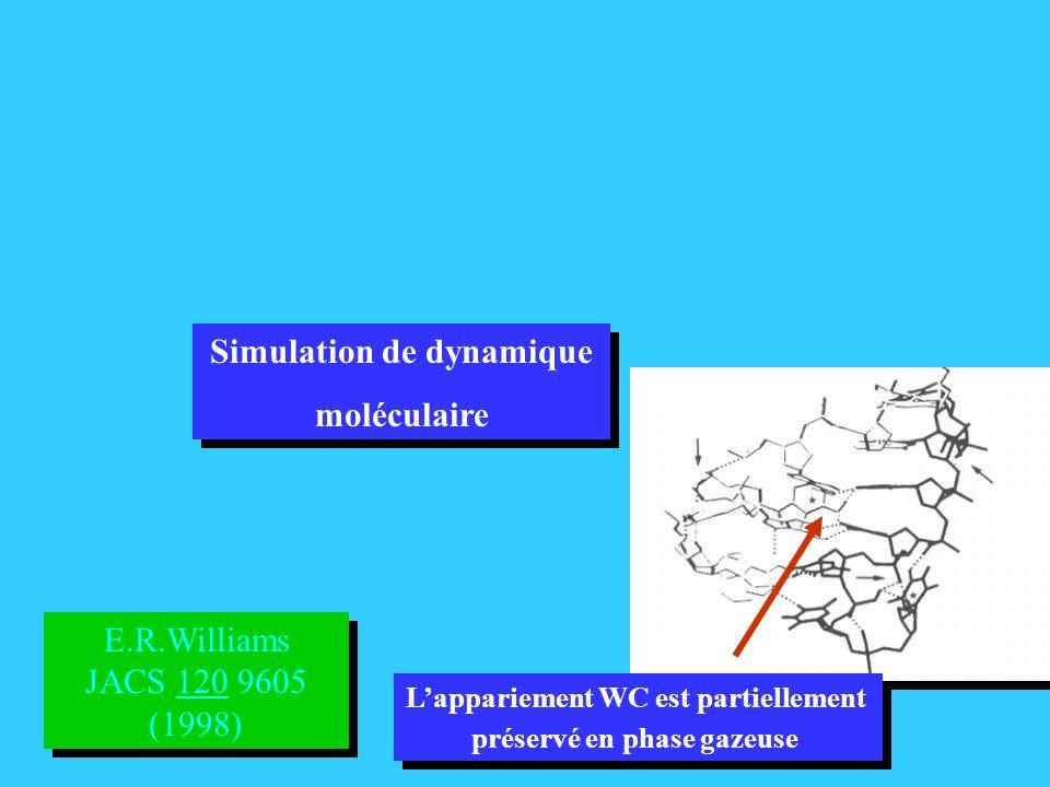 E.R.Williams JACS 120 9605 (1998) E.R.Williams JACS 120 9605 (1998) Lappariement WC est partiellement préservé en phase gazeuse Lappariement WC est partiellement préservé en phase gazeuse Simulation de dynamique moléculaire Simulation de dynamique moléculaire